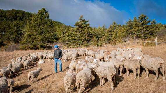Transhumance trails: Meeting French shepherds