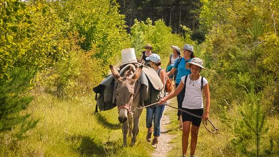 Hiking with a donkey in the Cevennes