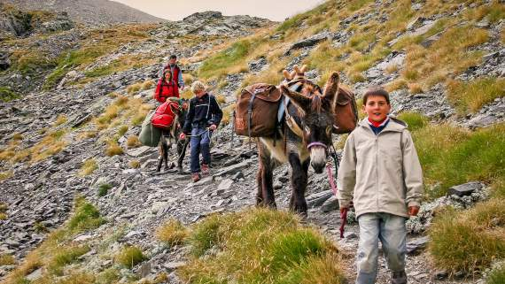 Hiking with a donkey in the Pyrenees