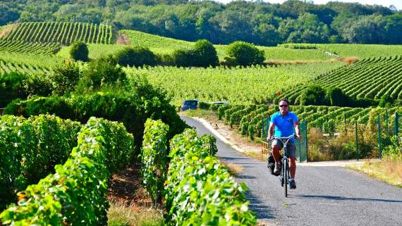 Organic wine tour in the Champagne region